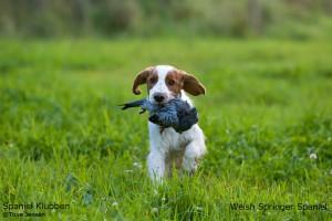 Bea_6_XLShow hunde navn + SPK1
