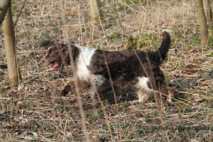 IMG_7151Show hunde navn + SPK1
